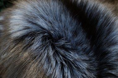 volpe argentata blu colore pelliccia must have 2017 2018