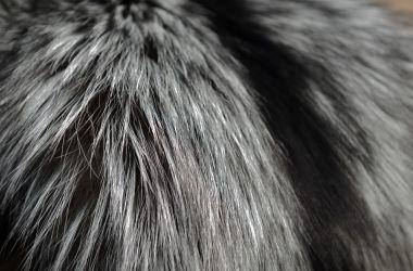 volpe argentata naturale colore pelliccia must have 2017 2018